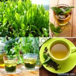 7 Types Of Teas And Their Benefits